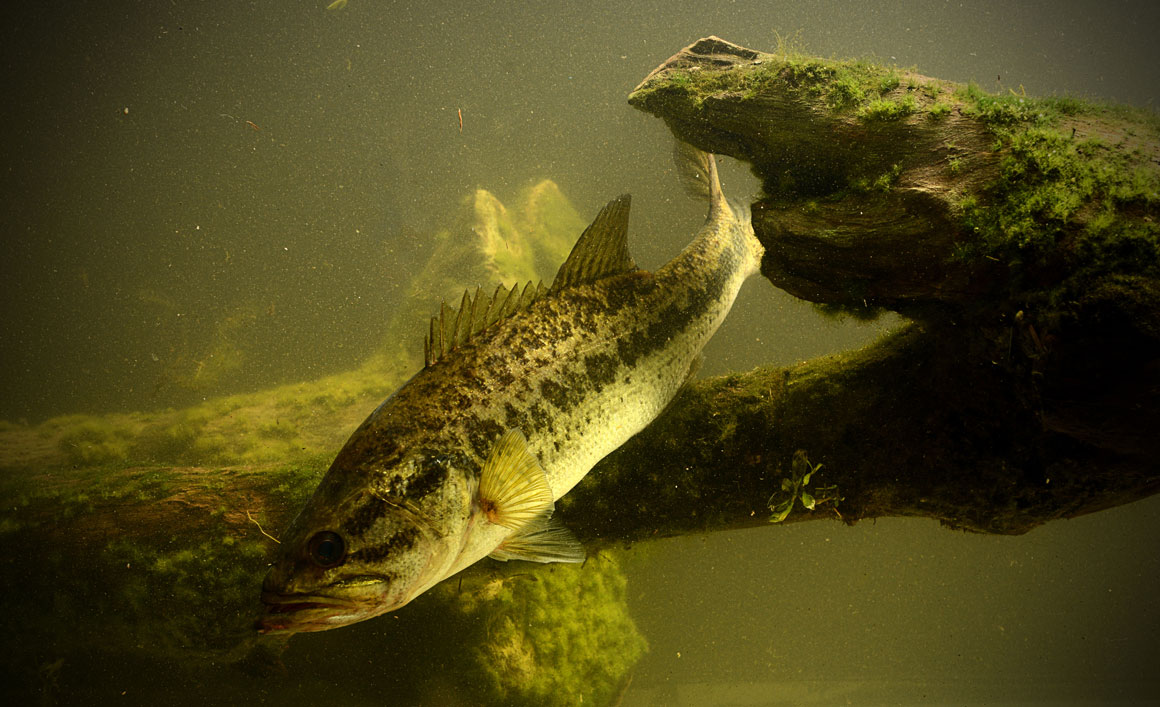 camouflage spearfishing