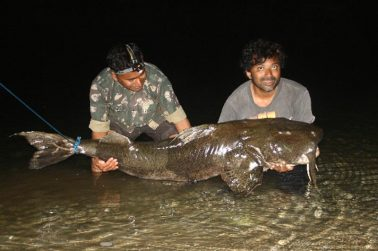 About Catfishing: Drift Fishing and Bait